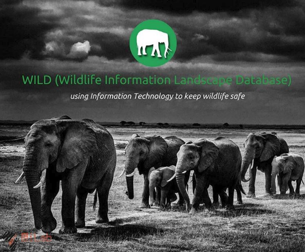 the wild app helping conserve our wild animals ilabafrica